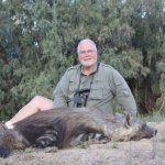 Brown Hyena hunted in a Puros Conservancy safari, Namibia.